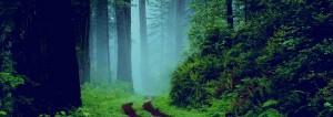 forestor