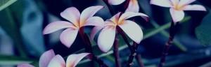 sflowersj